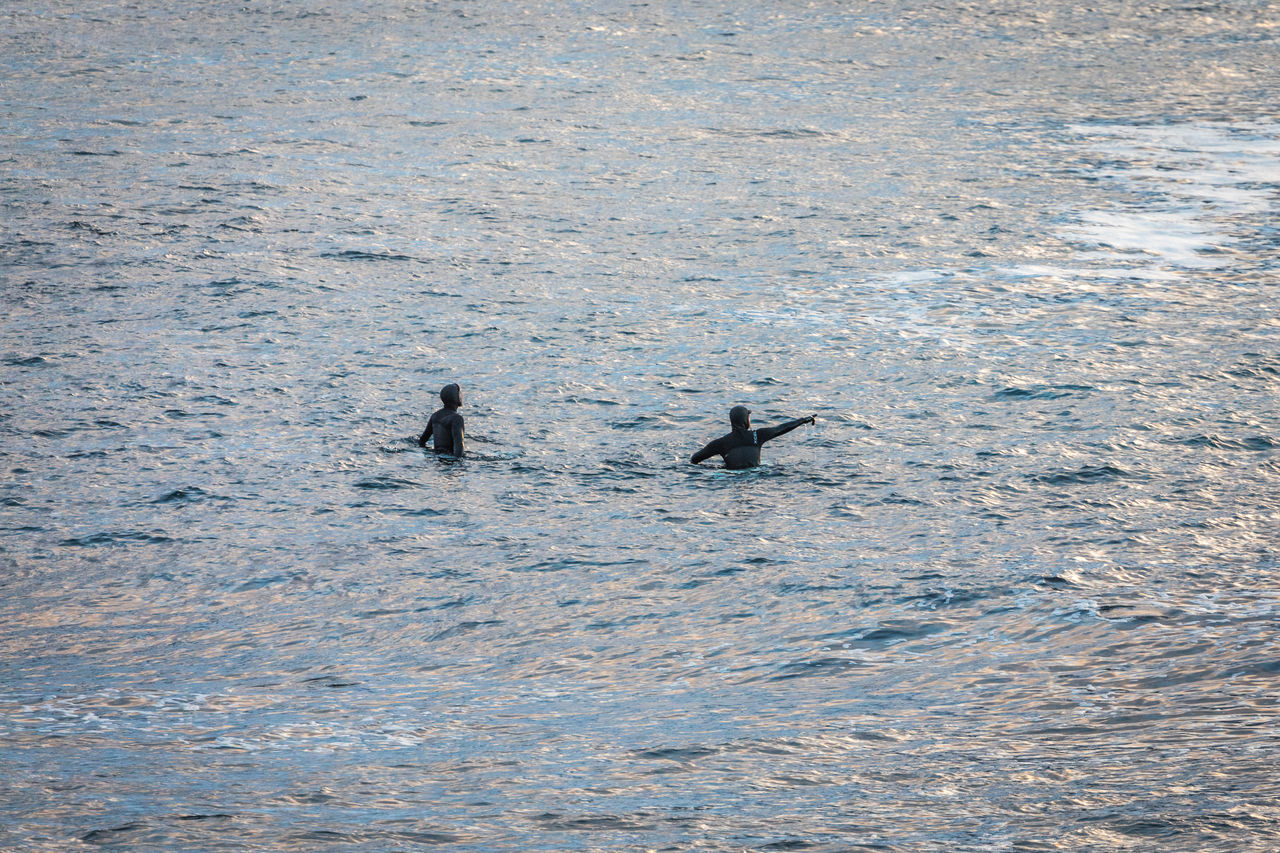 animals in the wild, two animals, animal themes, swimming, animal wildlife, togetherness, nature, day, water, outdoors, no people, bird, mammal