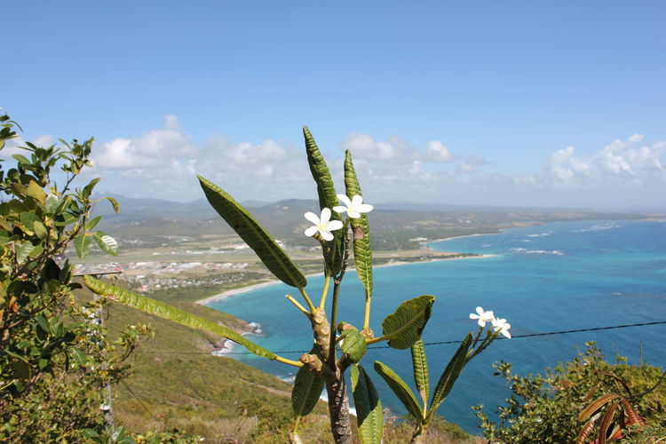 Flowers of the Caribbean Plant Growth Beauty In Nature Nature Day No People Water Flowering Plant Freshness Flower Outdoors Flowers Of The Caribbean