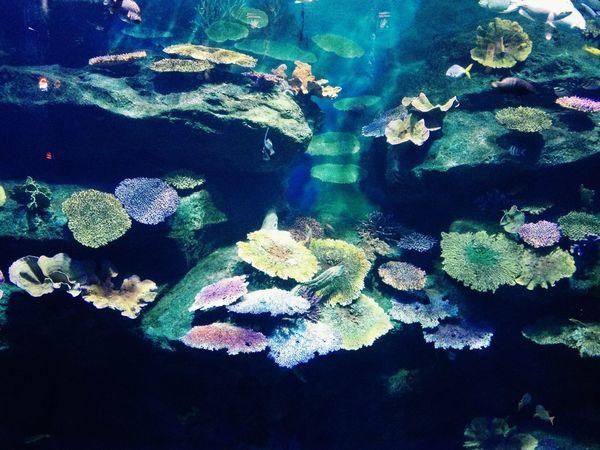 Fish Aquarium Beautiful
