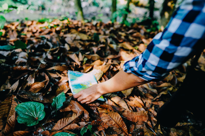 Autumn Change Day Dry Field Hand High Angle View Holding Human Body Part Human Hand Land Leaf Leaves Leisure Activity Lifestyles Nature One Person Outdoors Plant Part Real People