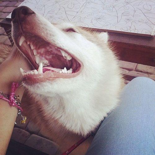 Hehe Pocieszny Pyszczek My lovely dog chcepieskaznow ah