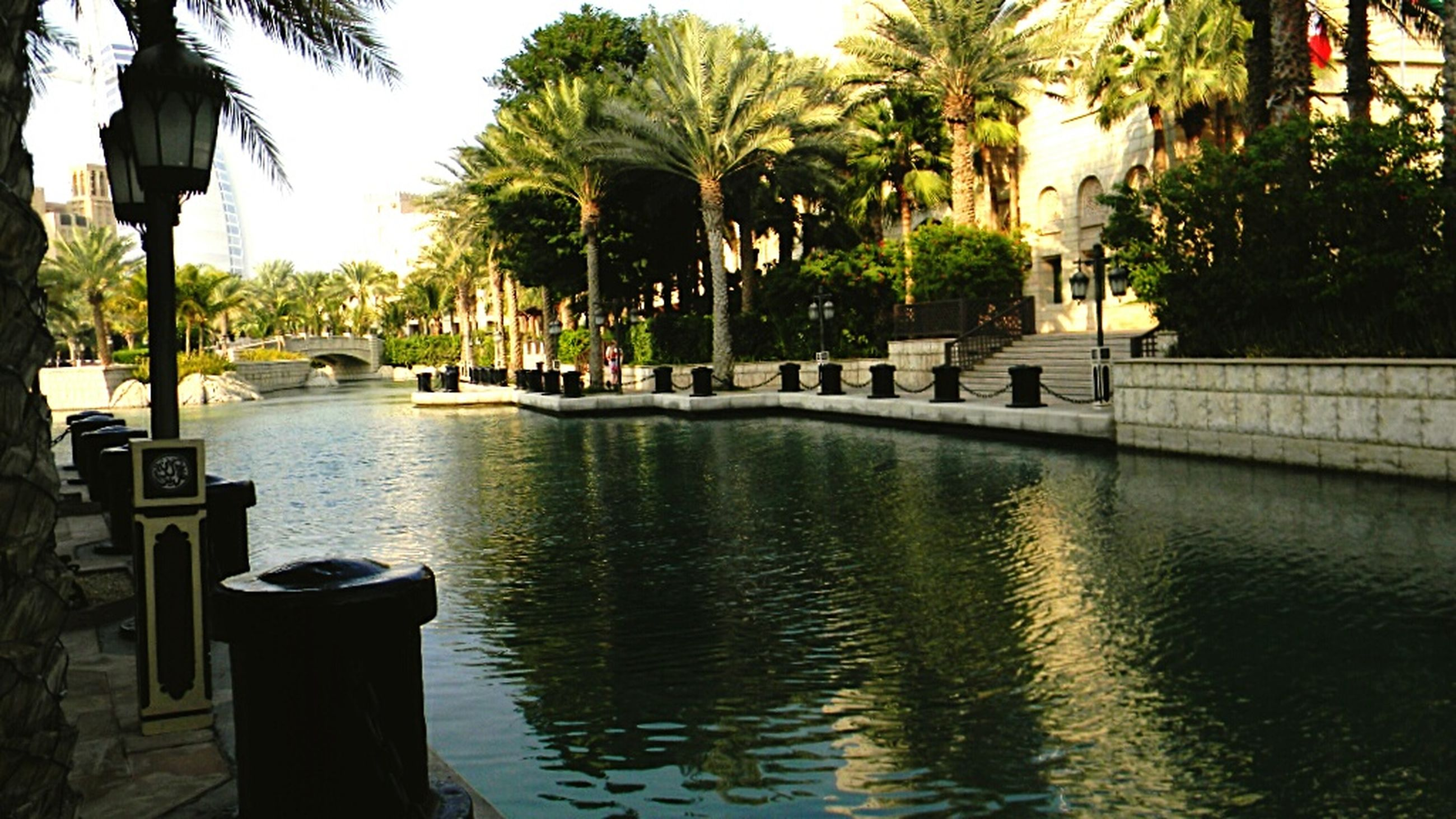 tree, water, palm tree, building exterior, built structure, architecture, incidental people, waterfront, tree trunk, sea, reflection, sky, nature, swimming pool, growth, tranquility, outdoors, city, tourist resort, day