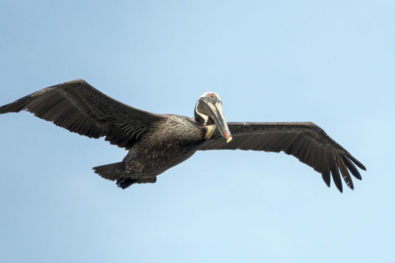 Gliding Through