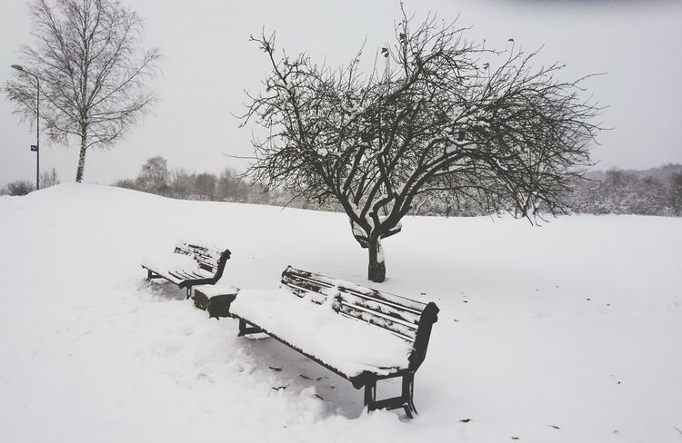 Tree No People Nature Outdoors Day Snow ❄ Winter Is Coming Frozen Snowing Weather Cold Temperature Winter Angelina B Sony Xperia Photography. Walking Ice Adventure Good Mood Wandering Bench Park White Landscape Wanderland Beautiful