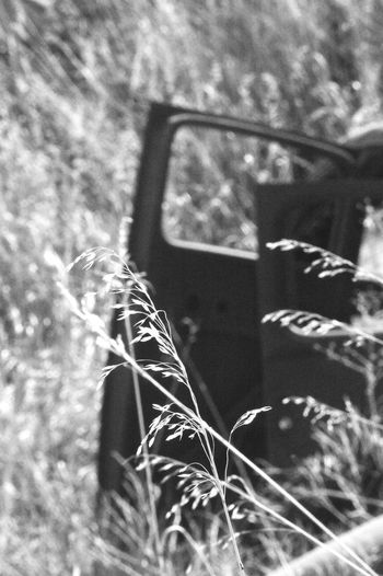Door of abandoned car Sun Shadow Eye Level View Day Outdoors Rusty Old Car Black And White