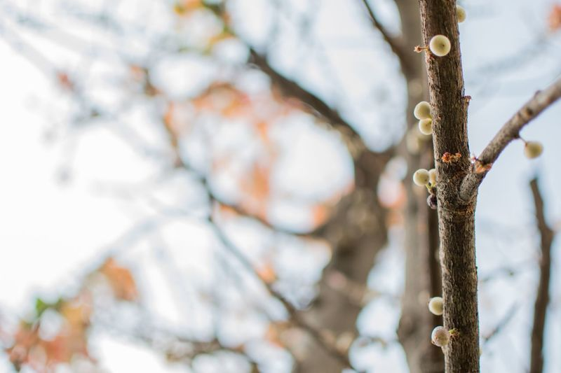 EyeEm Selects Focus On Foreground Tree Plant Day Nature No People Low Angle View Growth Flower Branch Outdoors Beauty In Nature Close-up Flowering Plant Selective Focus Twig Trunk Tree Trunk Plant Stem Wall - Building Feature
