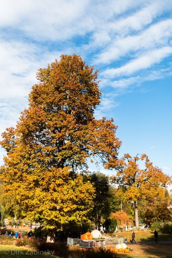 Autumn colors Autumn colors Autumn Leaves Colors Plant Tree Sky Cloud - Sky Nature Growth Beauty In Nature Outdoors Park Day Autumn