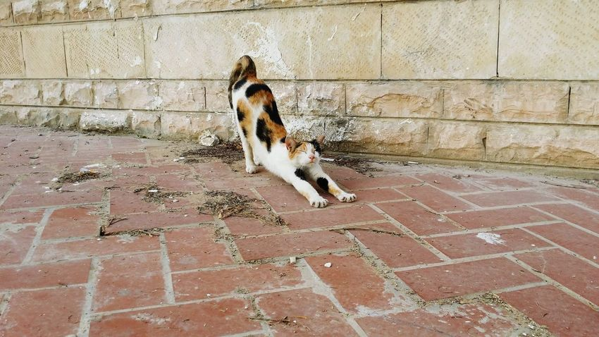 Stretching Cat Excercise Excercise Time Cats Lovers  Domestic Animals Pets Animal Themes Cat♡ Cats Of EyeEm Cats 🐱 No People Cats Look Catsoneyeem Leave Us Alone Mammal Outdoors Cats Lovers  By _photoinn😉