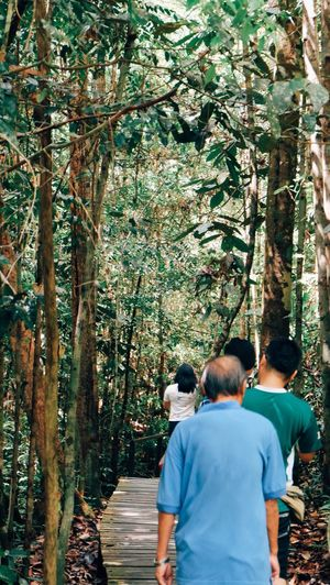 Rear view of people in forest