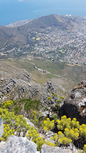 God's Glory On Display  Table Mountain Backdrop To Display Glory Breathtaking Panorama South Africa 🇿🇦 Cape Town, South Africa Cape Town Looking Down! Western Cape Freshness Mountain Range Beauty In Creation  Lion's Head Signal Hill Mountain Scenics Landscape Amazing Design