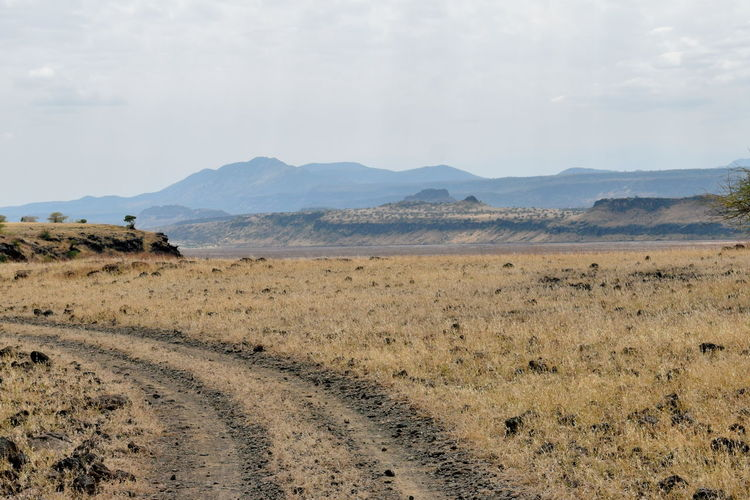 A dirt road against a savannah grassland background, lake magadi, rift valley, kenya