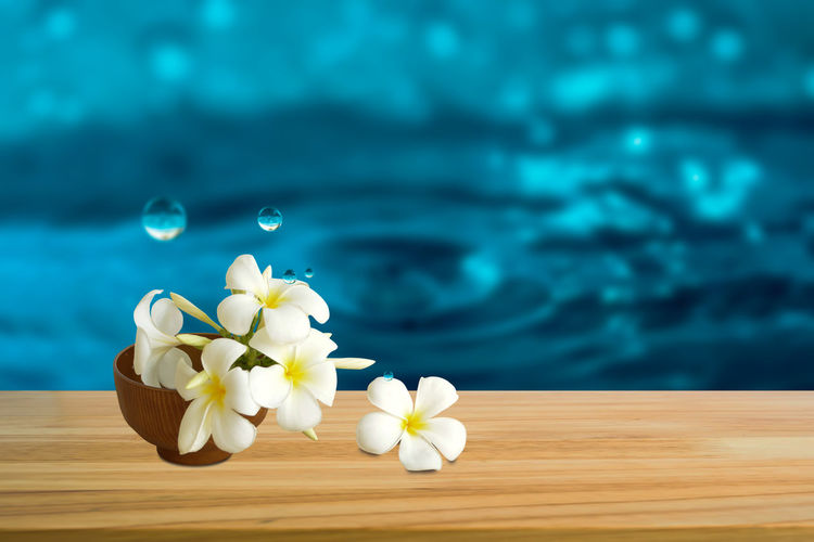 Beautiful White flowers (Plumeria) with waterdrop on wooden table. Copy Space Dew Falling Freshness Pure Wood Abstract Background Beauty Beauty In Nature Blue Bouquet Drop Flora Flower Freshness Luxury Montage Nature Spa Still Life Table Water Waterdrop White