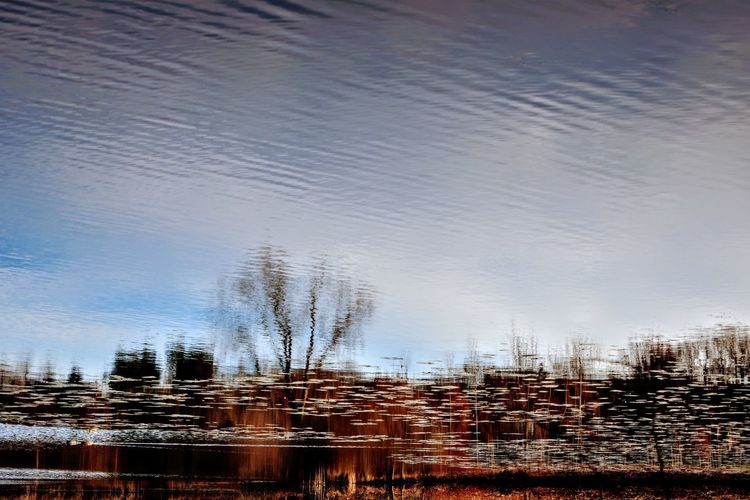 Reflection of trees in water against sky