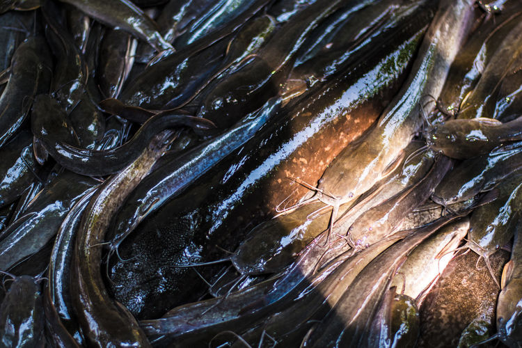 Catfish Fish Seafood Food Food And Drink Freshness Vertebrate For Sale Animal Wellbeing Retail  Healthy Eating Close-up No People Full Frame High Angle View Still Life Market Raw Food Backgrounds Large Group Of Objects Fish Market Ice Sale Outdoors Retail Display