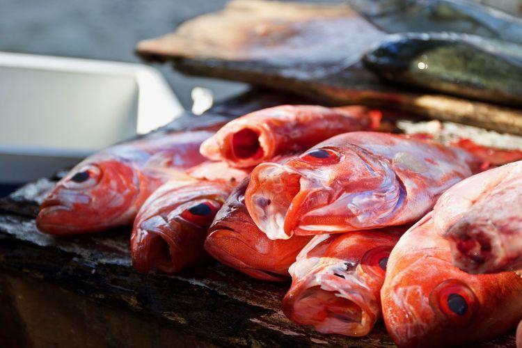 Fish Market Guarapari Raw Seafood Animal Close-up Crustacean Fish Fish Market Fishing Fishing Industry Food Food And Drink Freshness Healthy Eating Meat Omega 3 Omega 3 Fatty Acids Raw Food Retail  Sea Seafood Vertebrate Wellbeing The Still Life Photographer - 2018 EyeEm Awards