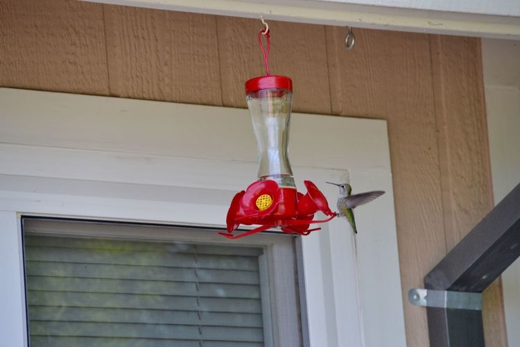Better Together The bird and the feeder... EyeEm Birds Humming Bird Flying Birdfeeder