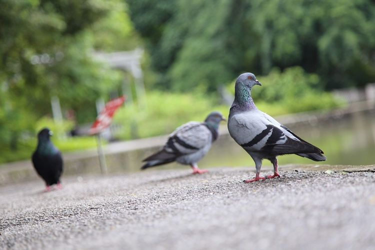 Surface level of pigeons perching on retaining wall