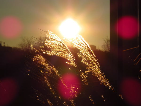 Farn Morning Morning Sun Sunlight Blinding Blinding Sunlight Bokeh Dry Fern Farn Leaf Fern Ferns Ferny Leaves Lens Flare Lens Flare Sun Lensflare Lensflares Light And Shadow Morning Mood Sky Sun Sunrise Sunset Sunspots Winter Sun
