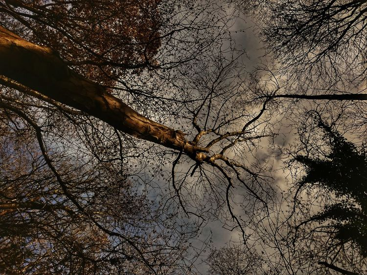 Sky Backgrounds Nature Beauty In Nature TreePorn Tree_collection  Looking Up At The Sky Lookingup Treelovers Tree And Sky Tree_collection  Tree Branches Treecollection Treescollection The Great Outdoors - 2017 EyeEm Awards