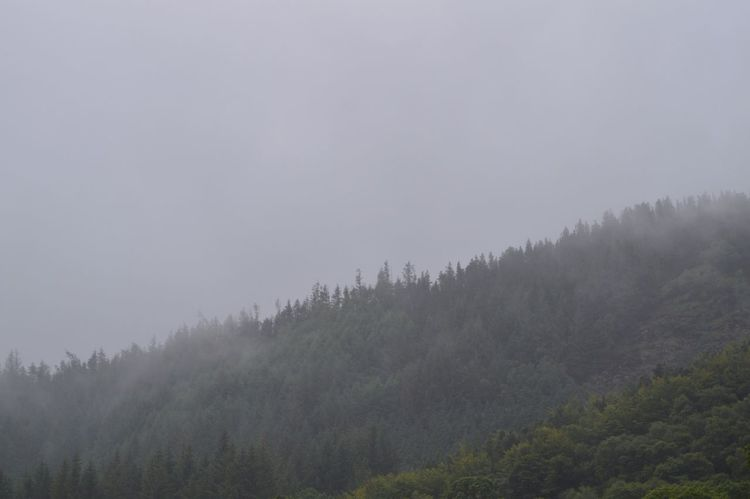 Mist over the trees Capturing Freedom Mist Ireland Popular Photos Scenery Nikkon Fog