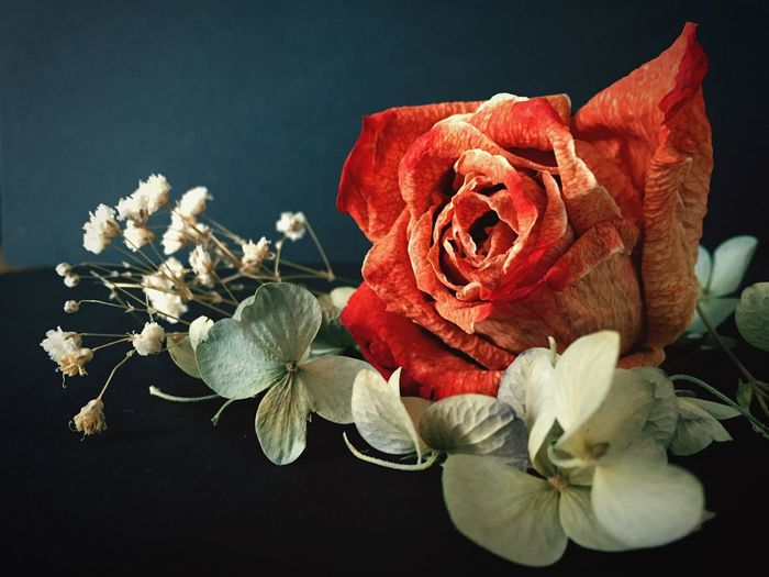 Dried Flowers Rose🌹 Babys Breath Flower Hydrangea