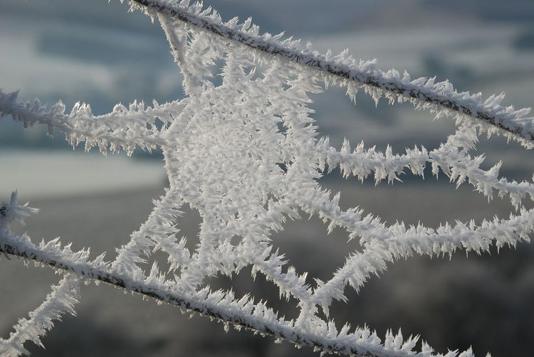 Freezing Cold Frozen Fence Wire With Ice And Cobweb Beauty In Nature Close-up Cold Temperature Day Fencewire Focus On Foreground Frosty Cobwebs Frozen Ice Ice Crystal Nature No People Outdoors Sky Snow Snowflake Weather Winter