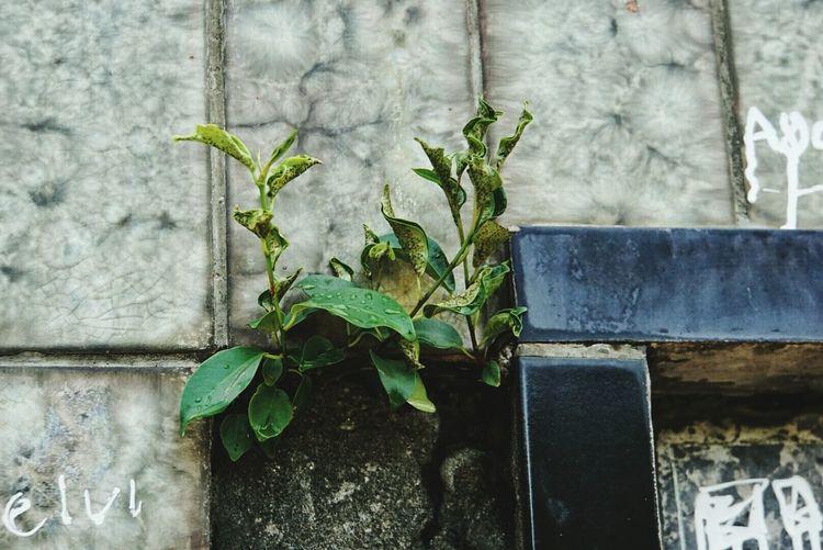Survival EyeEm Nature Lover Eyeem Plants Plants Tiles