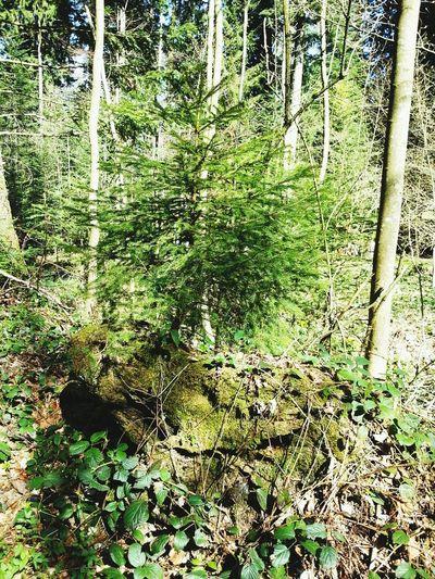 Hugging A Tree Aus Alt Mach Neu Eyeemnaturelover
