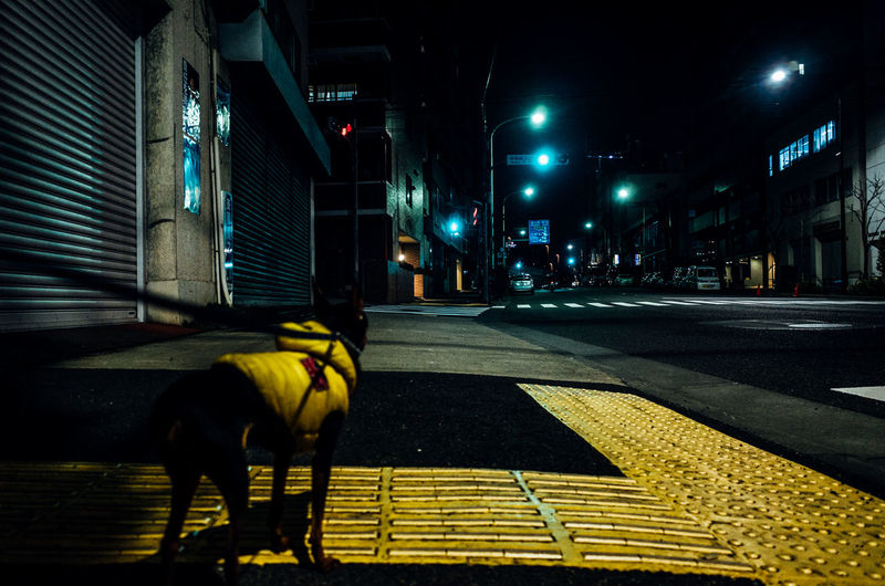 Low Angle View Animal Themes Architecture Building Exterior Built Structure City Dog Domestic Animals Full Length Illuminated Lifestyles Mammal Midnight Night Nightlife No People One Animal Outdoors Pet Pets Street Walking The Dog Yellow The Fashion Photographer - 2018 EyeEm Awards The Creative - 2018 EyeEm Awards HUAWEI Photo Award: After Dark