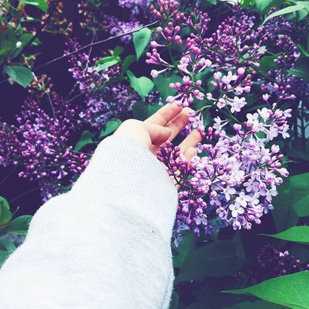 весна лайк Laik Лайкзалайк подписказаподписку лайквзаимно подписка весна цветы инста фоточка я фото красота лайк Laik Лайкзалайк подписказаподписку лайквзаимно подписка Retrica Katia яяя красотка 😚 😍😘😉😊😎👍👌👑моярукасирень
