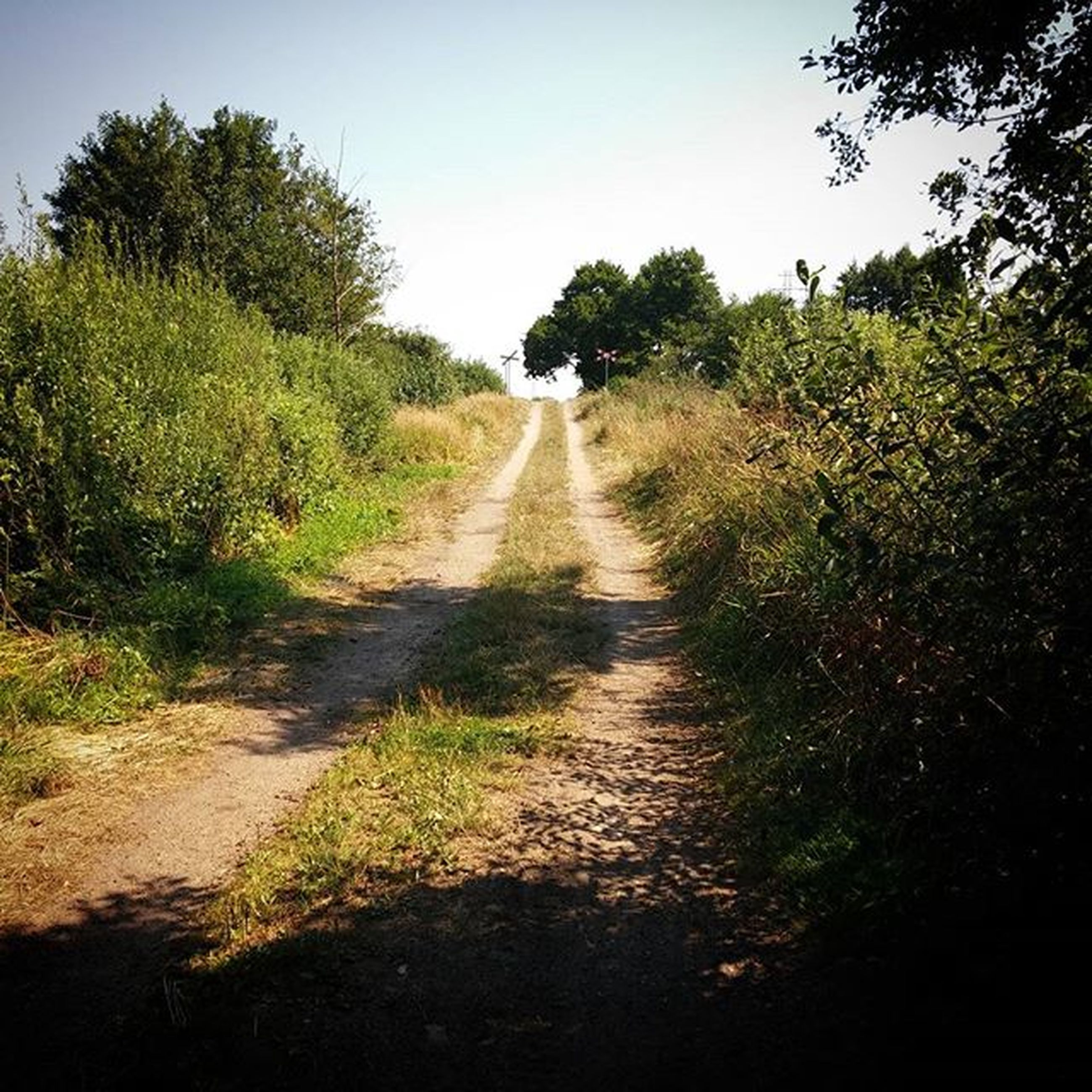 the way forward, diminishing perspective, vanishing point, tree, grass, dirt road, clear sky, tranquility, transportation, road, growth, tranquil scene, nature, landscape, narrow, country road, long, field, plant, footpath