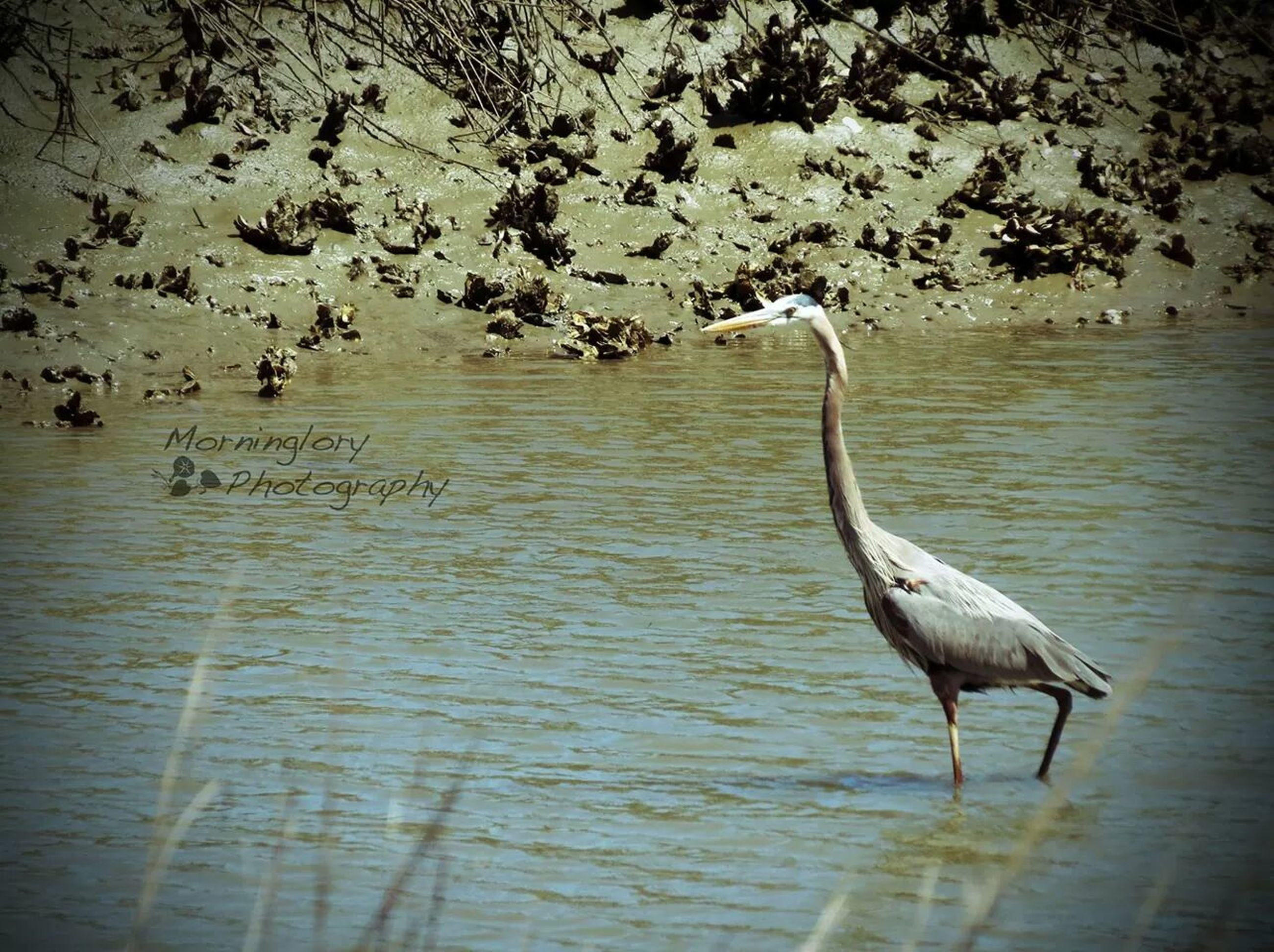 water, bird, animals in the wild, lake, wildlife, animal themes, nature, waterfront, reflection, rippled, tree, beauty in nature, tranquility, river, swan, tranquil scene, outdoors, day, swimming, no people