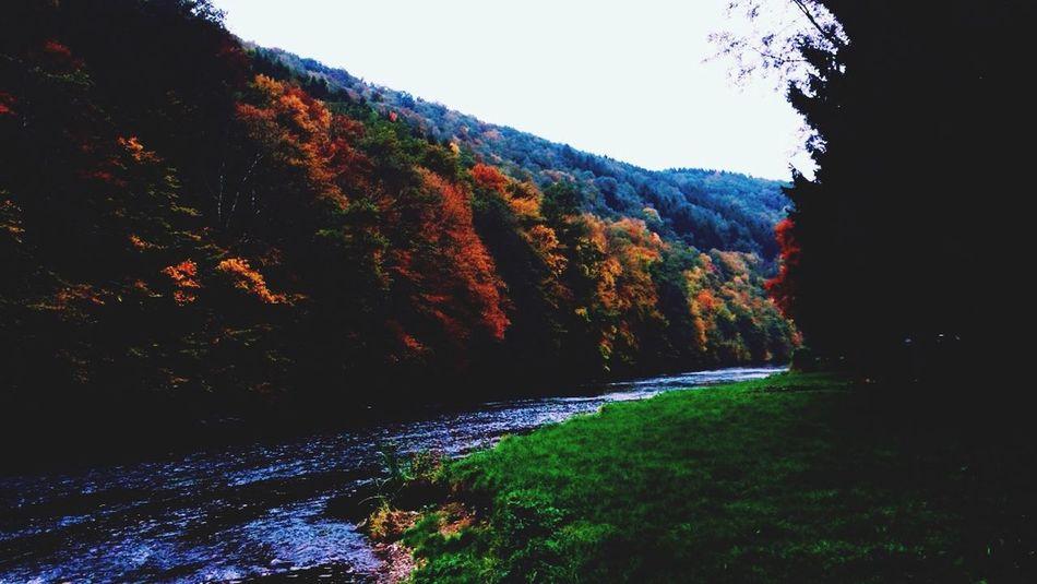 Autumn Trees River Nature Autumn Colors