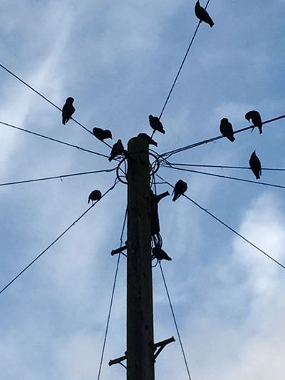 Cable Low Angle View Power Line  Power Supply Connection Sky Electricity  Cloud - Sky Fuel And Power Generation Electricity Pylon Silhouette No People Outdoors Day Technology Bird Telephone Line Nature Animal Themes Perching Morning Chorus