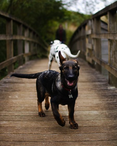 Mammal Domestic One Animal Domestic Animals Dog Pets Canine
