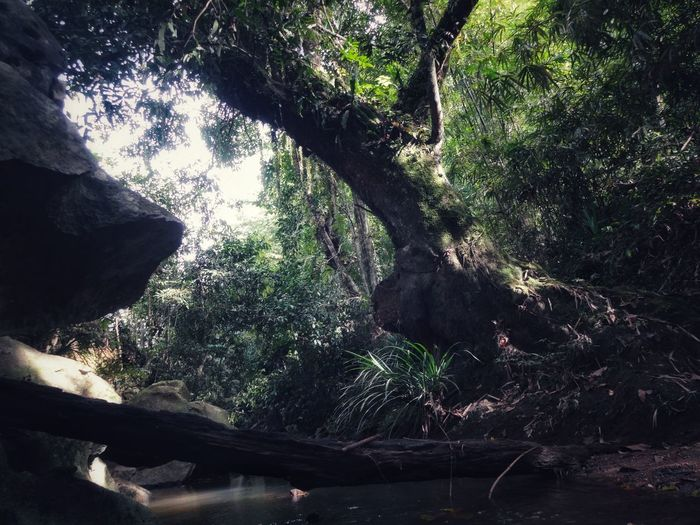 place of peace Tree Outdoors Nature Shadow No People Day Branch Low Angle View Forest Growth Beauty In Nature Sky Water Freshness EyeEmNewHere
