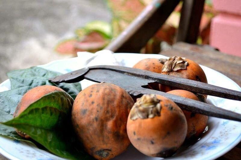 Sirih dikapur beserta pinang Untuklah makanan hai bujang teruna Orang tak ada jangan dikenang bahagia kan hati,gembirakan rasa - Betel Leaves Buah Pinang Sirihpinang Food Freshness Vegetable Healthy Eating Food And Drink Close-up No People Outdoors Day Ready-to-eat Village Beauty In Nature Melayustyle Daylife Nature Freshness Focus On Foreground Food And Drink Indoors  Kampung Halaman Kampungku Kampung