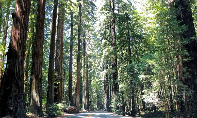 Prairie Creek Redwoods State Park Beautiful Nature Forest Green Green Color Nature Outdoors Park Prairie Creek Redwood Forest Redwood Park Redwood Trees RedwoodRegionalPark Redwoods Tranquility Tree Tree Trunk Feel The Journey
