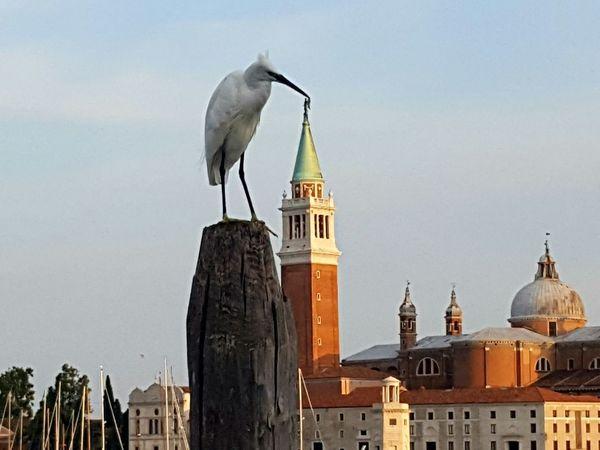 Animal Bird Outdoors Animal Wildlife City Church Scenics Telling Stories Differently Every Picture Tells A Story Everydayeverywhere Sky Waterbird Cultures Venice, Italy Venice No People Wealth Day Finding New Frontiers Perspective Perspectives And Dimensions Adapted To The City Miles Away The Photojournalist - 2017 EyeEm Awards Break The Mold Neighborhood Map Pet Portraits An Eye For Travel Adventures In The City