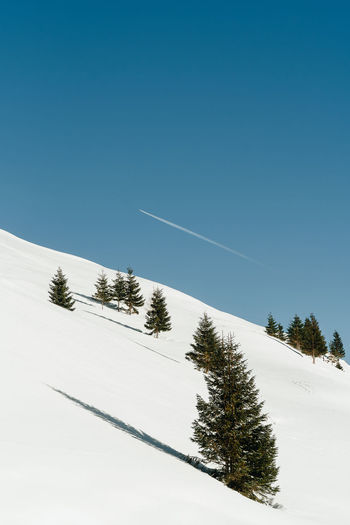 Vapor trail and coniferous trees on snowcapped mountain against clear blue sky