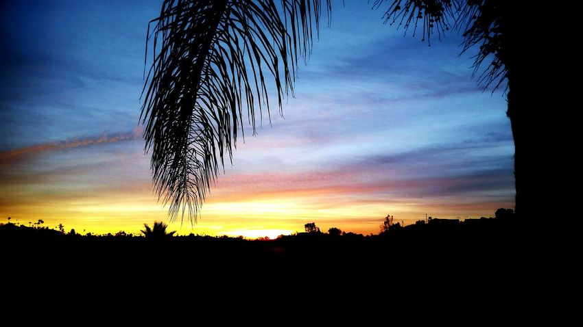 horizons, silhouettes, sunsets, palm trees