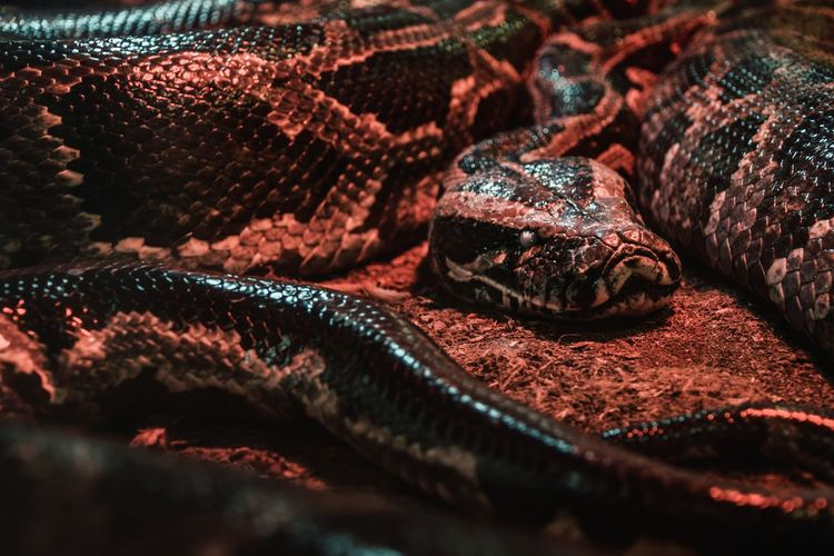 Cute Animals 😋Snake Red Animal Themes Animal Body Part Animalphotography Nature Photography My Perspective EyeEm Nature Lover Beauty In Nature Nature EyeEmNewHere Eye4photography  First Eyeem Photo Nature_collection Freshness Indoors