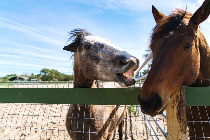 Meanwhile, some heated discourse was going on back at the ranch... Horses Country Living Hanging Out Squabbling Animals Domestic Bliss Showcase March Showcase: March