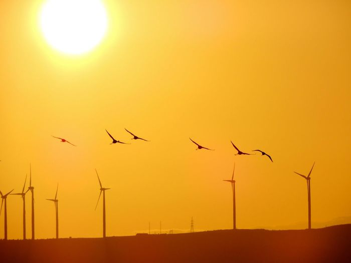 Low angle view of windmills and birds against orange sky during sunset
