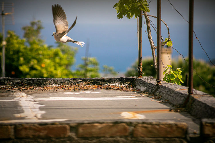 Close-up of seagull flying against the sky