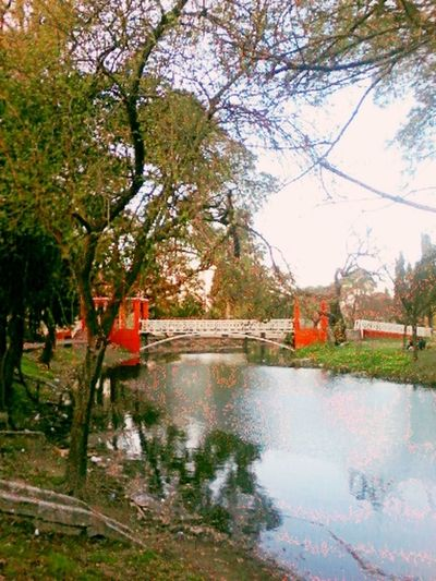 Colour Of Life Color Taking Photos Córdoba Argentina Parque Sarmiento Parque  Puente Arboles Verde