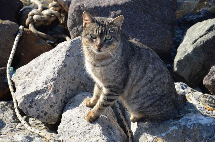 Turkey Izmir Nofilter Hello World Cat Relaxing
