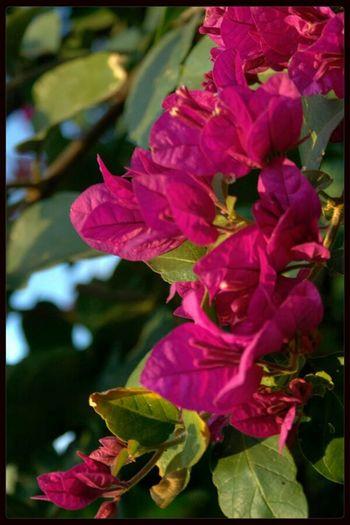 Flowers Merit Hotel Girne/ Kıbrıs North Cyprus