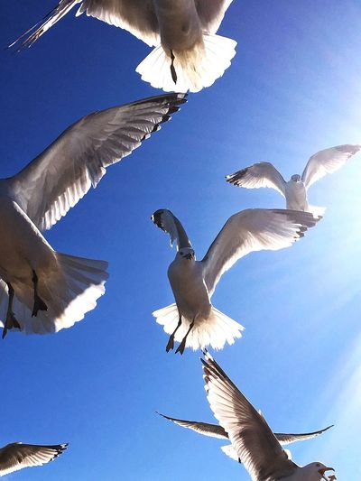 Overhead View Flock Of Birds Flockofseagulls Flock Of Gulls Hanging Out Soaring Up Above Wingspan Wings Majestic Lakeside Iphoneonly Energy Bluesky Sunshine Rays Of Light Photography In Motion Action Photography Flight