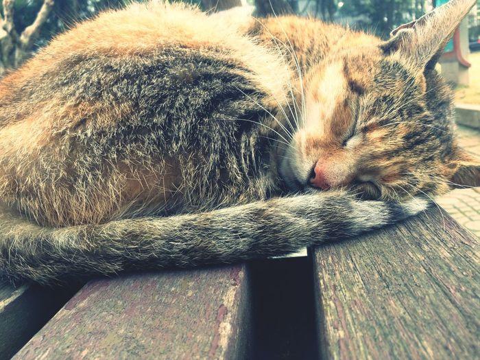 Cat Taking Photos Cat♡
